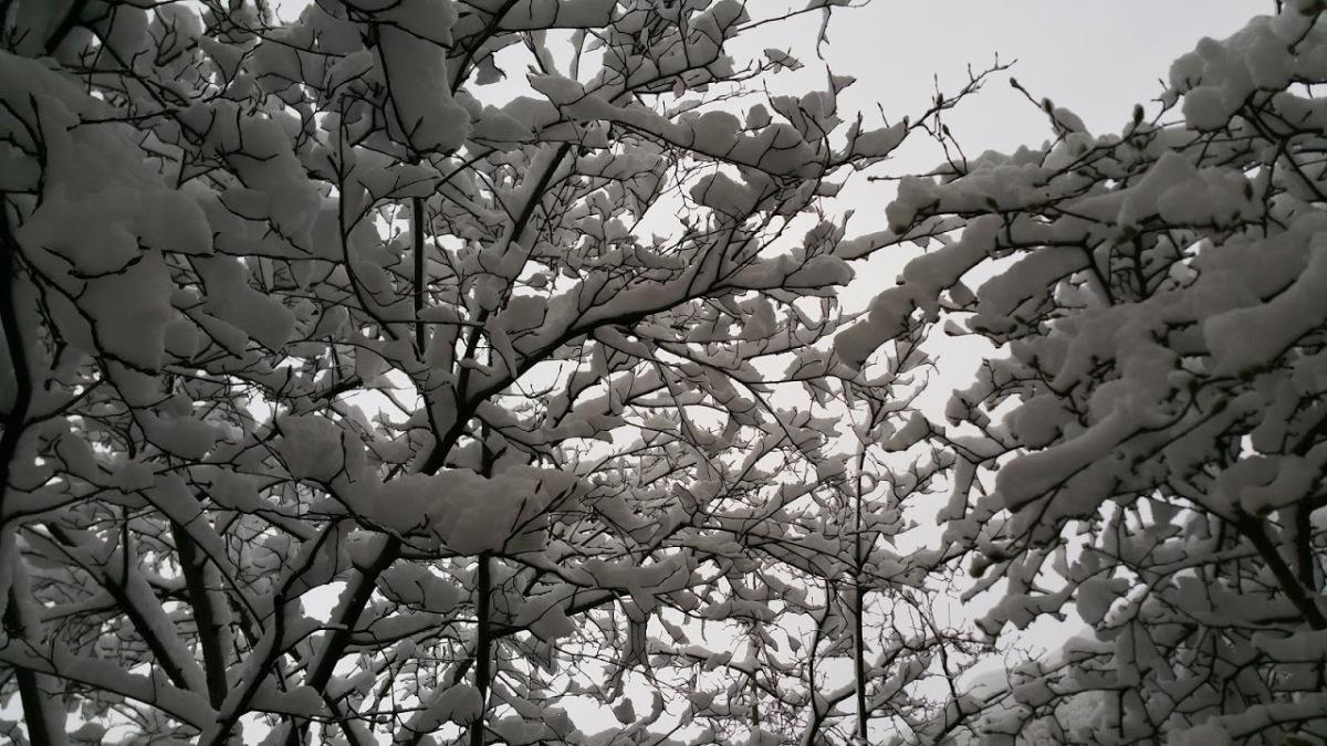 Ephémère percée de neige(物の哀れ)